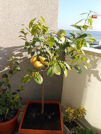 Beurre chaud basilic citron 430