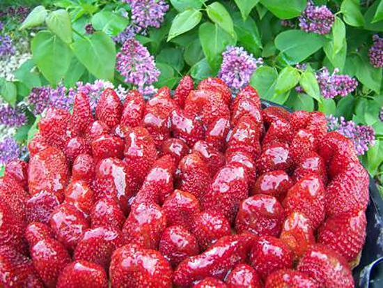 recette Tarte aux fraises amandine