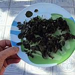recette Sécher du basilic au MO