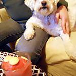 recette SORBET A LA FRAISE le préféré de Colette !!! (sans sorbetière)