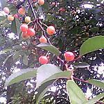 recette Sirop de fruit rouges au vin sans alcool (pour les enfants)