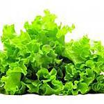 recette Astuce :Conserver la salade