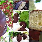 recette Bonbons biscuités au chocolat