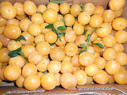 Clafoutis aux prunes 430