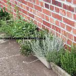 recette Faire sécher les fines herbes (1er partie)