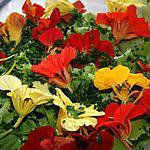recette Laitue batavia aux fleurs de capucine