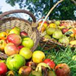 Tarte aux pommes des 7