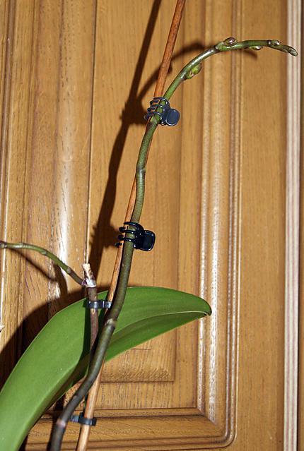 Recette de comment faire refleurir une orchid e - Comment garder une orchidee ...