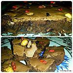 recette Brownies aux fruits d'automne