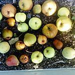 recette mousse  de pommes   recette de nathalie  les     FOOD  AMOUR