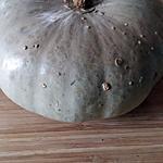 recette Courge bleu de Hongrie gratinée