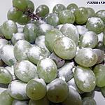 recette Astuce pour laver ses fruits/legumes