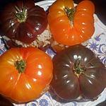 recette Tomates farcies aux moules et aux coques