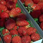 recette Confiture de fraises à la menthe du jardin