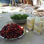 recette confiture de prunes rouges façon joeyyy !