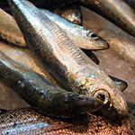 recette sardines en papillotes