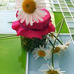 recette La cuisine des fleurs, boutons de pâquerette au vinaigre