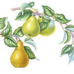 Confiture de poires au chocolat