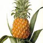 recette Ananas à la gousse de vanille