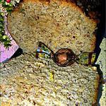recette Cake à la noisette et à la cannelle