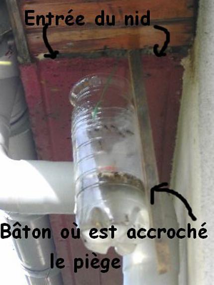 Piege a guepe fait maison bv63 jornalagora - Piege a mouche maison ...