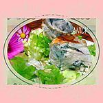 recette Roulé de dinde ,champignons ,ciboulette et Philadelphia