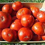 recette Le Gers ou les TOURINS ... Le tourin à la tomate fraiche (si possible)