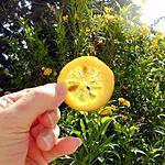 recette Tranches de citron confites au sucre