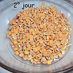 recette Faire germer graines pour les salades